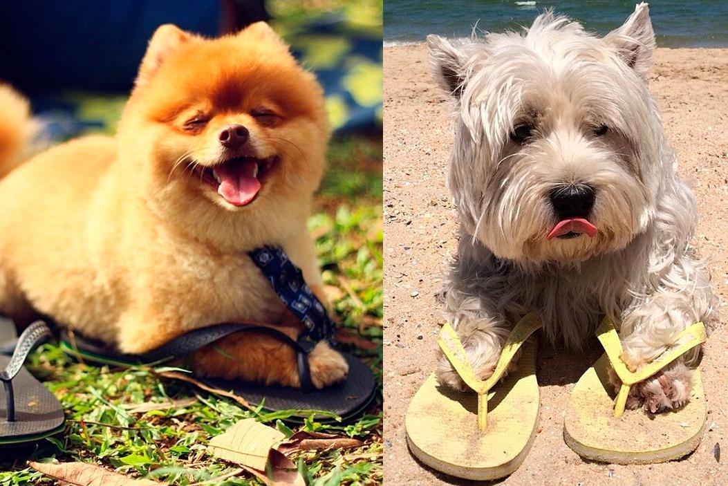 cachorros-13-03-2017